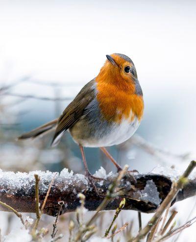 Wildvogelfutterung Im Winter Tierschutz Land Steiermark